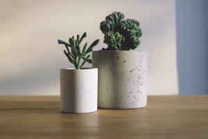 Cacti on a desk.