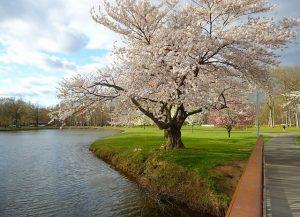 New Jersey park.