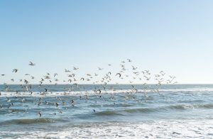 birds flying over the sea in New Jersey